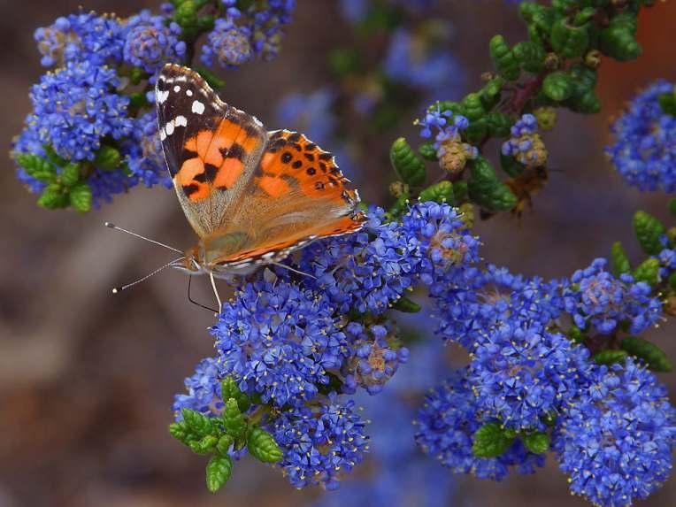 butterfly-06.jpg