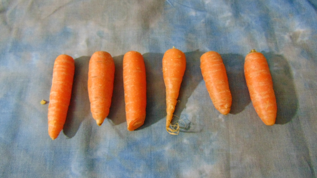 Six Raw Carrots on a Blue Cloth