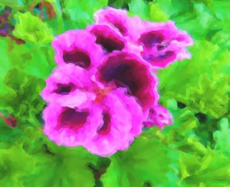 redviolet