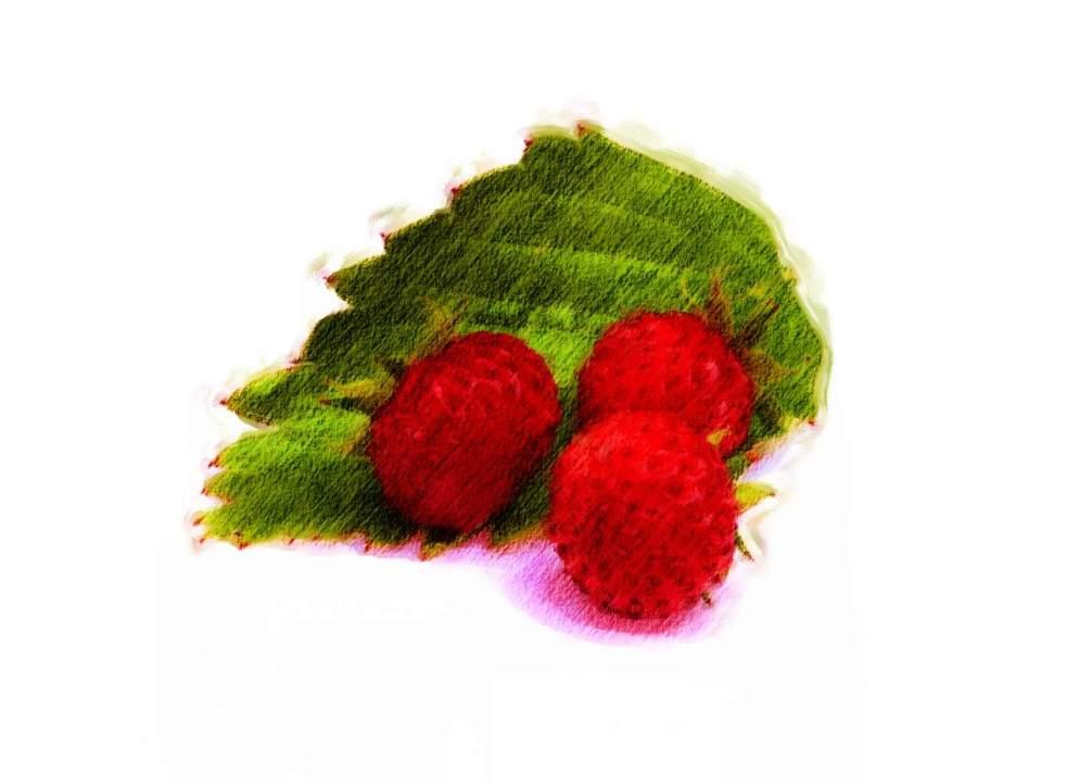 wild-strawberry_Painting.jpg