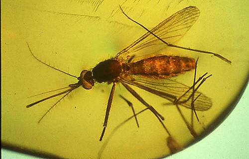 insectinamberflickr.jpg