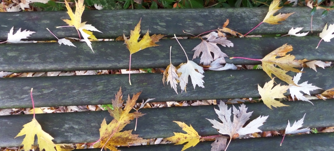 Autumn Leaves on a Bench on Salford Quays