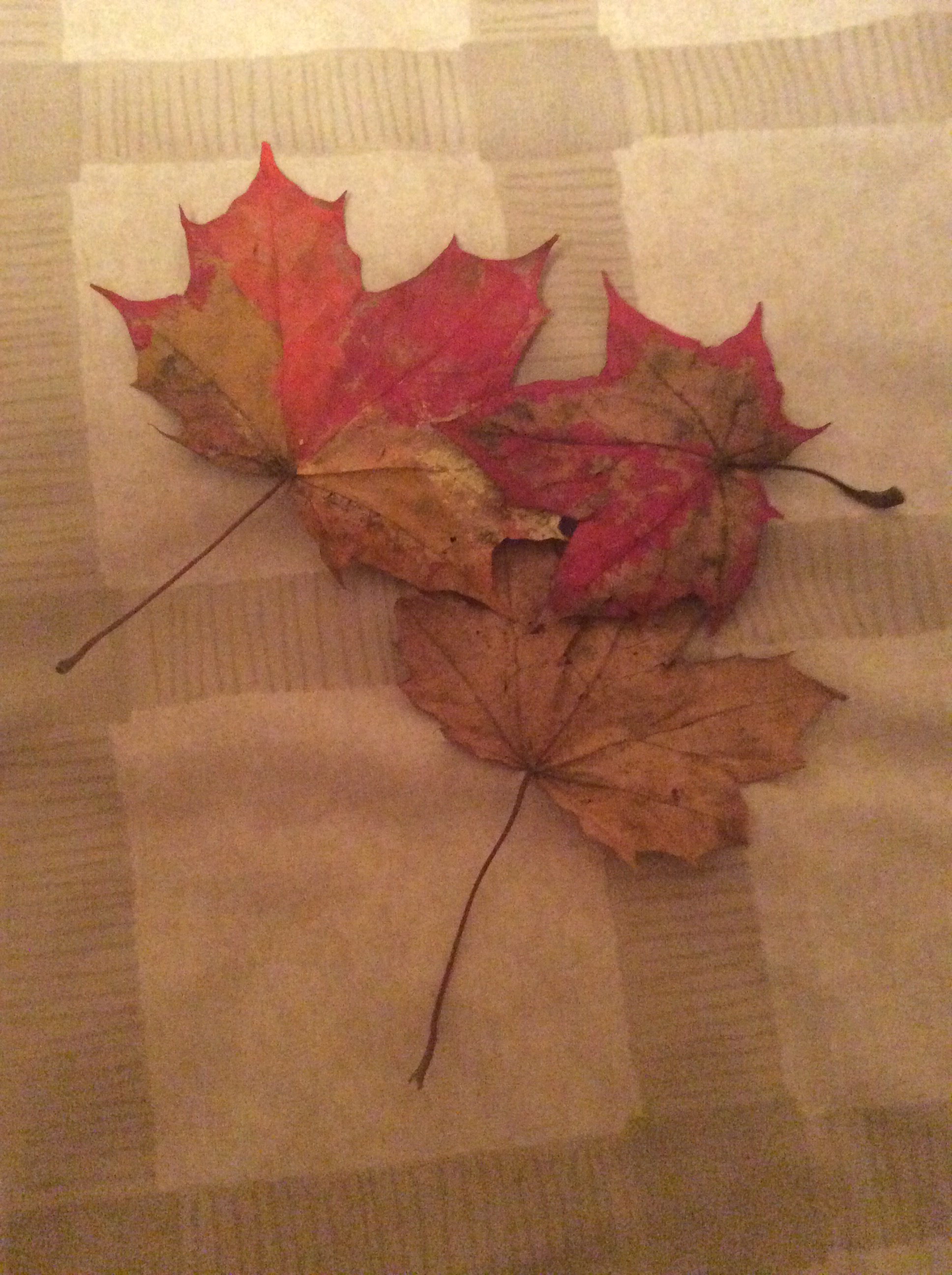 Three fallen leaves, recovered from the local park - and used in Artwork!