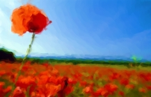 poppy-remembrance-poems-bk
