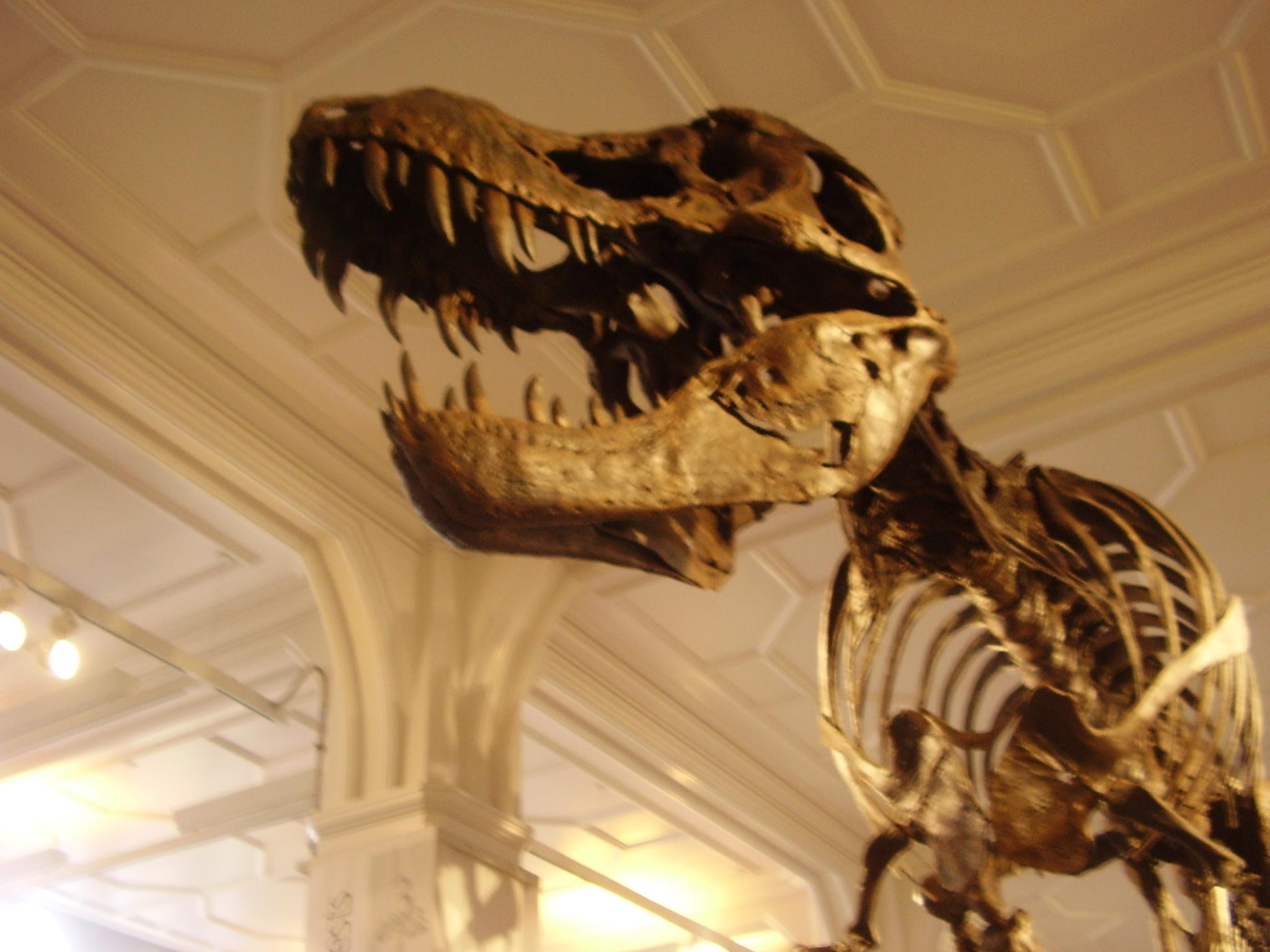 Rex 2.JPG