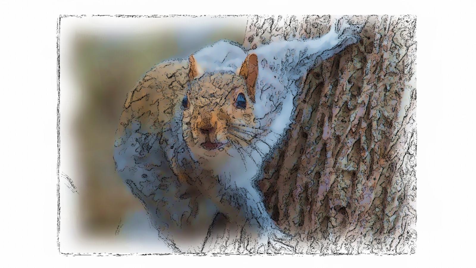 SquirrelP.jpg