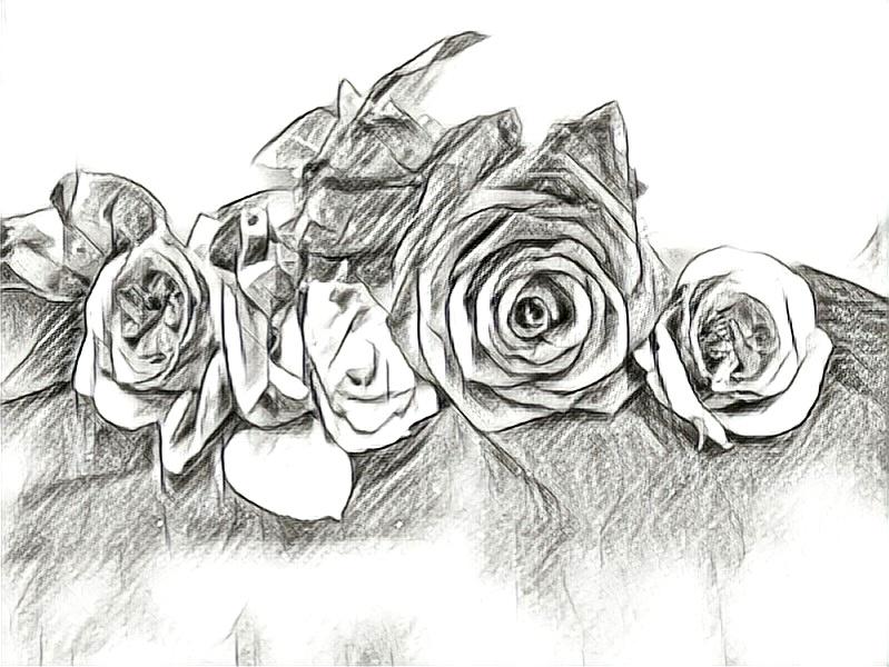 Pincellus Roses.jpg
