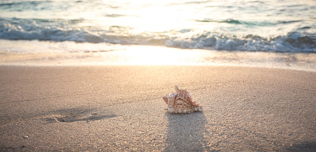 beach sea seashell