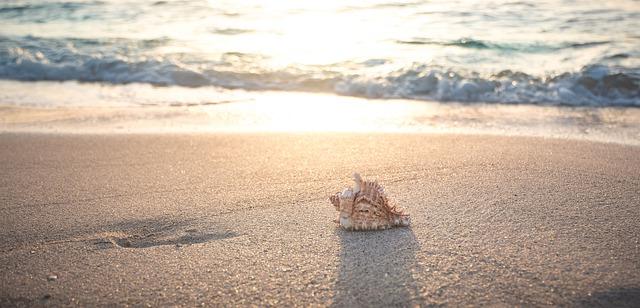 beach sea seashell